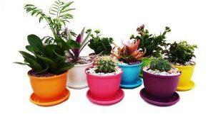 پخش انواع گلدان پلاستیکی